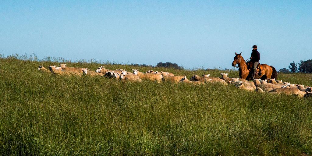Convenio Inter-institucional para carne ovina.